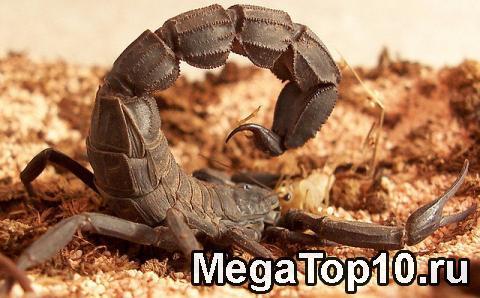 Топ 10 самых опасных насекомых в мире с фотографиями