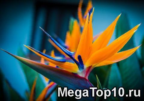 Самые необычные цветы в мире - фото, описание